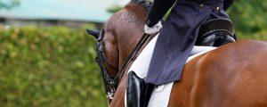 Equestrian Facilities & Services